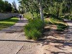 Por la otra Parte el Parque de Cabecera conecta con Parque Fluvial del Turia (25 Km) hasta Ribarroja