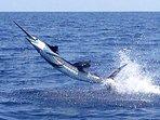 World-Class Sport-Fishing