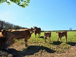 Meet the farm residents