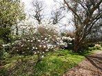 Gardens in springtime