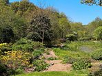 Azaleas beside pond