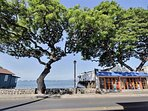 Head over to downtown Lahaina, an old whaling town where you can find many fantastic small shops and restaurants.