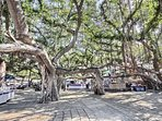 Arts and crafts fairs are often held under this legendary banyan tree in Lahaina.