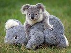 Koala Reserve - 5km's away