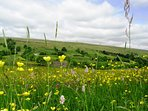 Beautiful wild flower meadows abound in the dale in spring and early summer