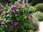 Le jardin de l'Ensouleiado, en fleurs