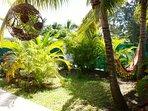 Le jardin avant de la villa Mabouya