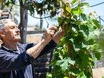 Domenico the gardener