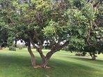 Olivos milenarios (entorno)