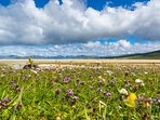 Our Northton machair with all the wild flowers is also birds watcher's paradise