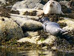 We inform you all about walks and where to spot seals
