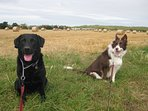 Dog friendly village, with plenty of walks available