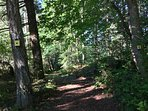 Go for a walk on the path and enjoy 'forest bathing'...