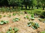 La permaculture s'invite à l'Òrta pour le plus grand plaisir des papilles