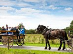 Go for a ride on the jaunting cars