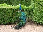 gardens marqueyssac