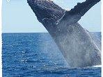 Whale facendo la danza di fronte al nostro condominio
