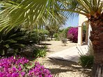 Surrounded by mature palms, shrubs and fruit trees.