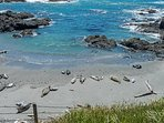 Sea View - Sea Ranch Beach Seals