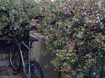 Piccolo giardino indipendente, biciclette a disposizione