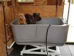 Walk-in electric lift tub and hot shower for your dogs - pet shampoo provided!
