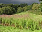 The Brick pits nature reserve adjacent to the barn. A magnet for wildlife