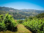 Vineyards and river