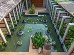 Baan Puri - Lotus pond