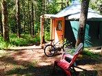 Bob cat yurt