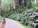 Banks-Vernonia State Trail runs through Vernonia Springs property