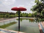 Swimming Pool with Mushroom umbrella