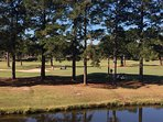 Watch golfers navigate trees and sand traps from your balcony. Stream has heron, turtles, fish, etc.
