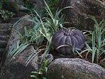 Beautiful surrounding granite rocks at the villa