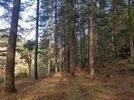 Jageshwar Forest