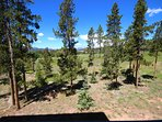 Pines view