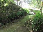Hidden pathway near cottage #3