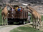 To do: San Diego Zoo Safari Park Ride the Tram & explore the expansive African exhibits; 30 mins NE.