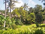 View of central lawn looking toward Villas 13 and 14 among palms, banana, ferns and tropical plants.