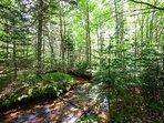 Walk along the cascading creek that runs through the forest.