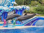 To do: SeaWorld Amazing Roller Coasters, Rides, Shows, & Family-Friendly Activities; 5-10 min drive