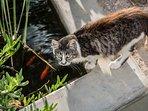 Elenitsa cat