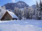 Wintermärchen im Bergwald