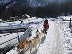 Husky-Schlittenfahrten direkt ab der Hütte