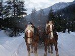Romantische Pferdeschlittenfahrt in unserem Winterwald