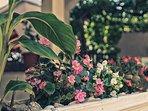 flourish plant