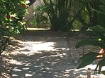 Front walk shaded by overarching plumeria trees bearing sweet smelling blossoms.