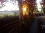 Driveway to Carraig Dunsey House in the early morning sunrise.