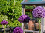 Hyning Gardens