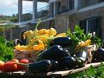 Prodotti dell'Orto-giardino Mediterraneo di Casale Dionisia