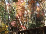 More fall color from the upper deck